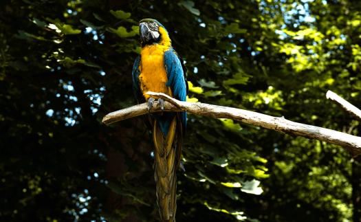 Papagei im Zittauer Zoo