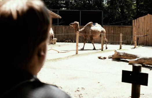 Im Zittauer Zoo.